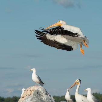 Zwerm vogels op kust, lake of the woods, ontario, canada