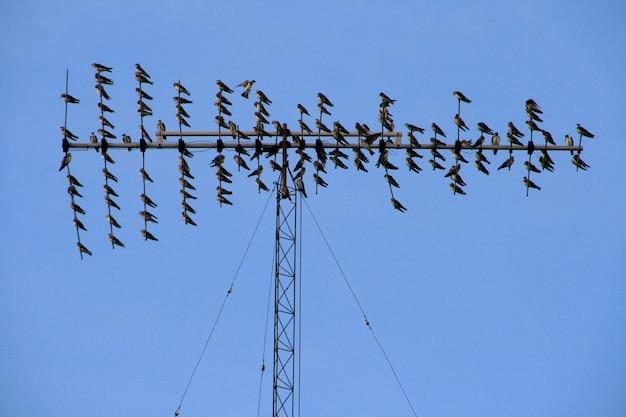Zwerm vogels over radioantenne