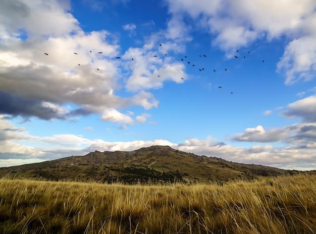 Zwerm vogels vliegen over de bergen in de blauwe lucht met wolken en gras op de grond. madrid.