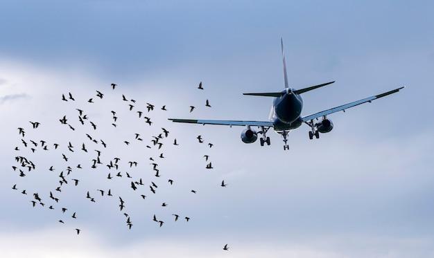 Zwerm vogels voor vliegtuig op luchthaven, conceptbeeld over gevaarlijke situaties voor vliegtuigen