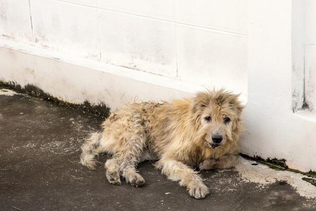 Zwervende hond squat buiten kijken staren naar de camera. de hond kijkt naar fotograaf, verdwaalde hond, dakloze hond