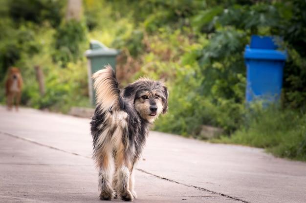 Zwerverhond die zich buiten het letten op het staren bij camera bevinden. de hond kijkt naar fotograaf, verdwaalde hond, dakloze hond