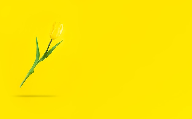 Zwevende gele tulp met schaduw eronder en kopieer de ruimte.