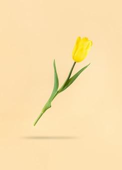 Zwevende gele tulp op een beige achtergrond en schaduw eronder. mimimalistische vakantie stockfoto.