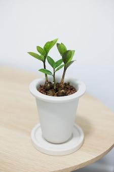 Zz plant in witte keramische pot op houten tafel
