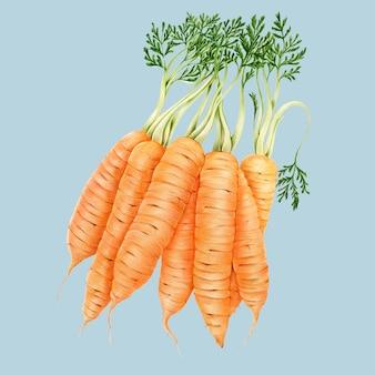 Hand getekend aquarel van wortelen