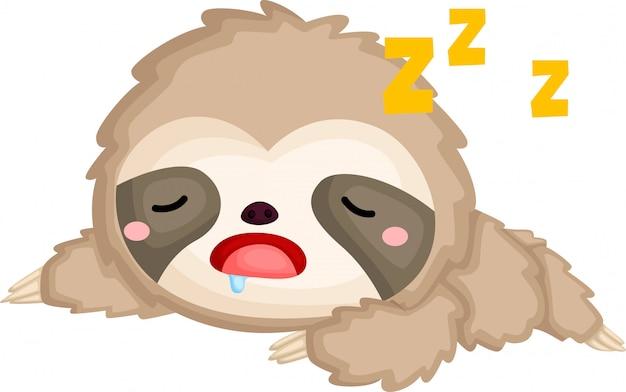 A van een schattige slapende luiaard