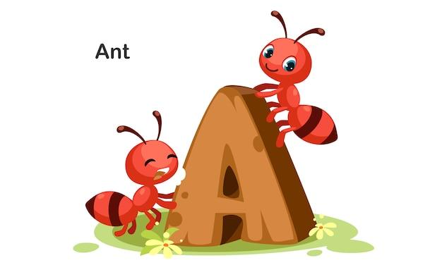 A voor ant