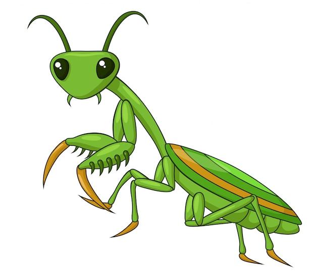 Aanbiddelijke praying mantis cartoon