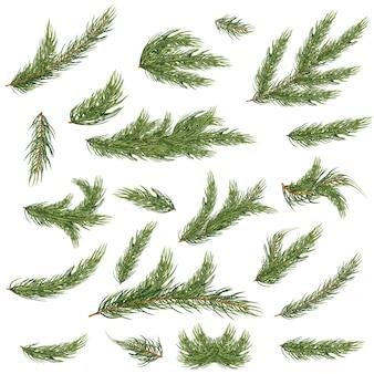 Aantal fir takken. kerstboom.