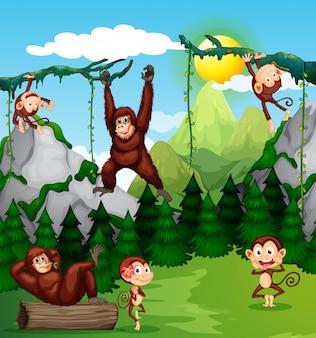 Aap en chimpansee in de natuur