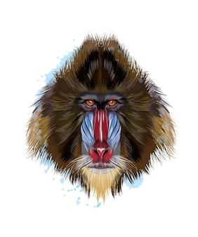 Aap mandril hoofdportret van een scheutje aquarel, gekleurde tekening, realistisch.