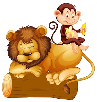 Aap zittend op leeuw