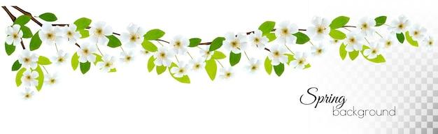 Aardachtergrond met de lentebloesem van kers. vector.