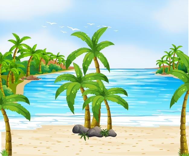 Aardscène met kokospalmen op strand