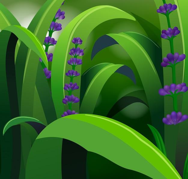 Aardscène met lavendel en gras