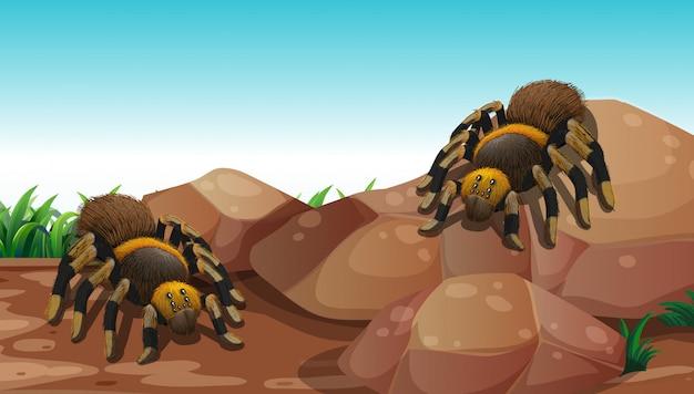 Aardscène met twee spinnen op rots