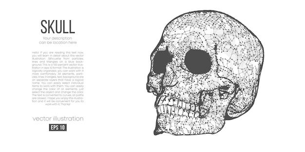 Abstract veelhoekig silhouet van de schedel van de mens