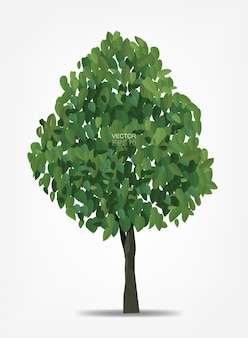Abstracte boom op witte achtergrond voor landschapsontwerp en architecturale decoratie. vector illustratie.
