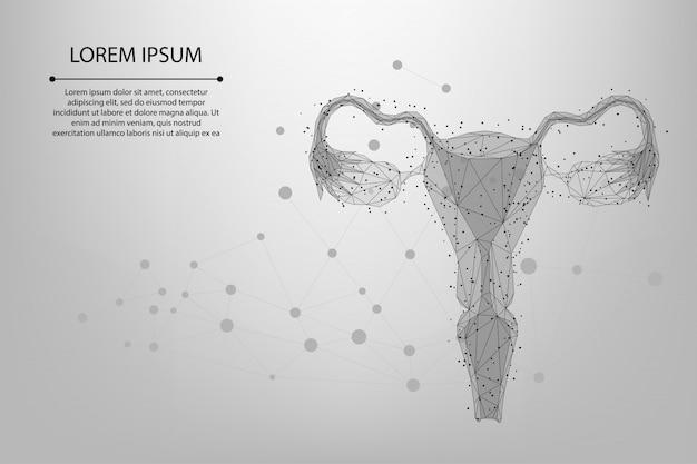 Abstracte maaslijn en punt eierstokken. lage poly vrouwelijke voortplantingsorganen baarmoeder en eierstokken gezondheidszorg.