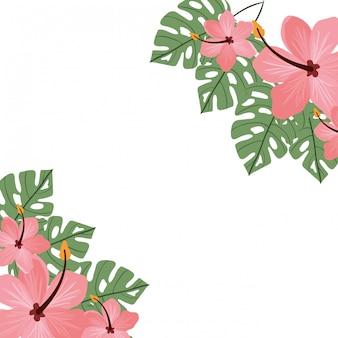 Achtergrond met bloem en bladeren van de zomer