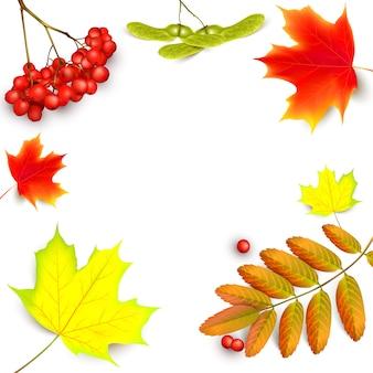 Achtergrond met esdoorn herfstbladeren en rowan takken met ashberry.