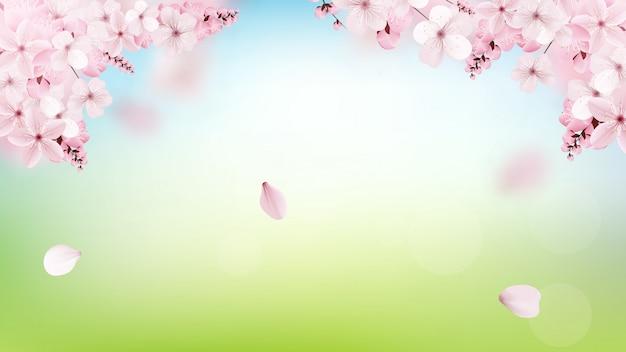 Achtergrond met tot bloei komende lichtrose sakurabloemen