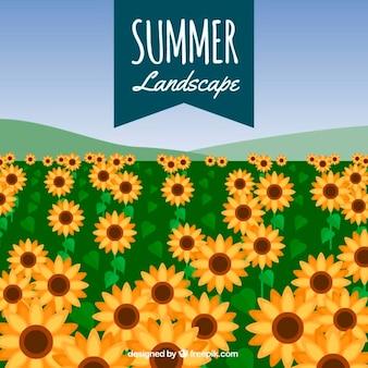 Achtergrond van een veld met zonnebloemen