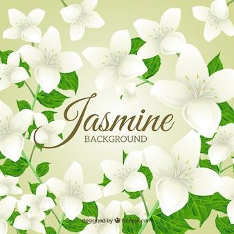 Achtergrond van mooie jasmijn met bladeren