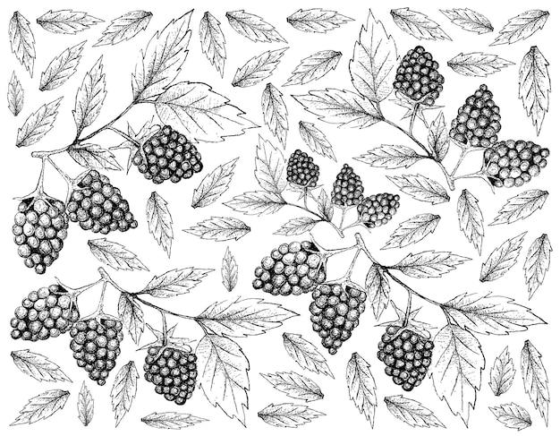 Achtergrond van verse blackberry-vruchten