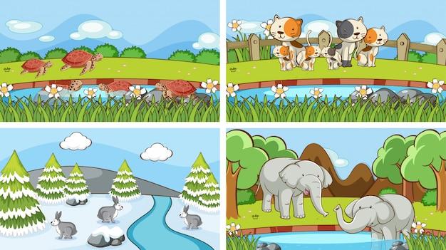 Achtergrondscènes van dieren in het wild