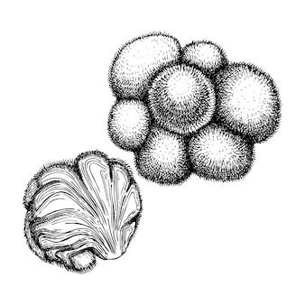 Adaptogene paddestoel handgetekende illustratie.