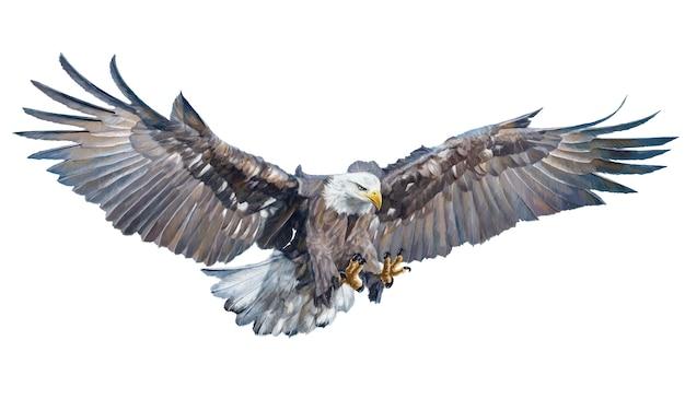 Adelaar vliegende gevleugelde aanval hand tekenen