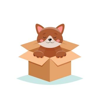 Adopteer een huisdier - schattige kat in een doos, op witte achtergrond