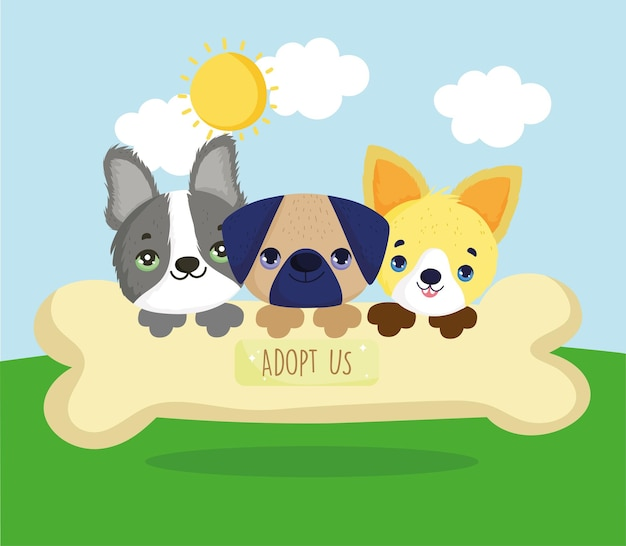 Adopteer ons puppy's