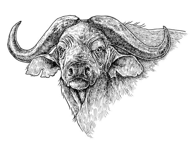 Afrikaanse buffel, met de hand getekende illustratie