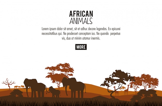 Afrikaanse dieren concept