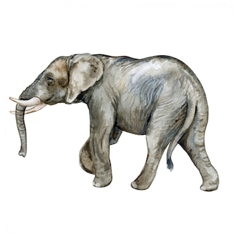Afrikaanse olifant in aquarel