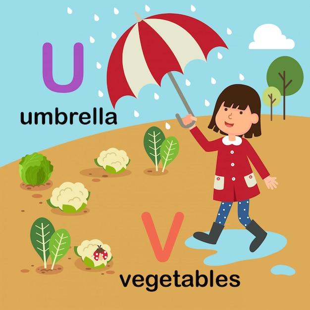 Alfabetletter u voor paraplu, v voor groenten, illustratie
