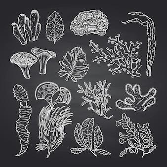 Algen schets. zeewier ingesteld op zwart schoolbord