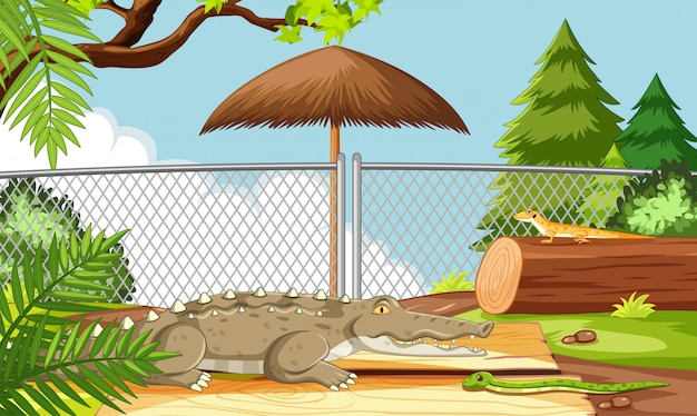 Alligator in de dierentuinscène