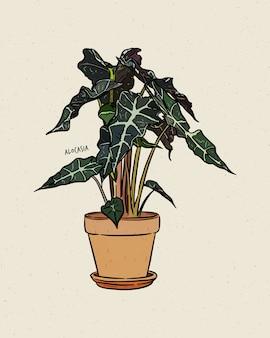 Alocasia is een geslacht van breedbladige wortelstok of knolachtige meerjarige bloeiende planten uit de familie araceae. hand loting schets.
