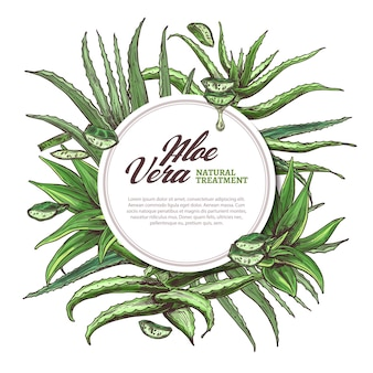 Aloë vera cirkelframe met hand getrokken plakjes en bladeren van kruidengeneeskunde illustratie