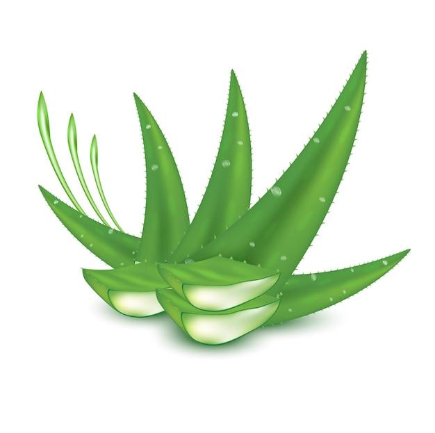 Aloë vera plant vers groen collageen en vitamine serum huidverzorging schoonheid cosmetica product