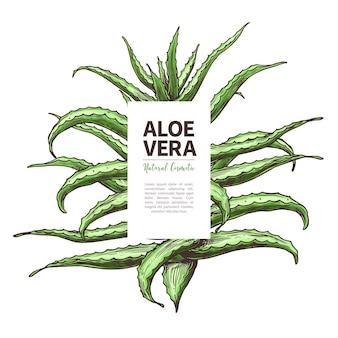 Aloë vera schets ontwerpsjabloon van label hand getrokken huis kruidengeneeskunde bloem en plant