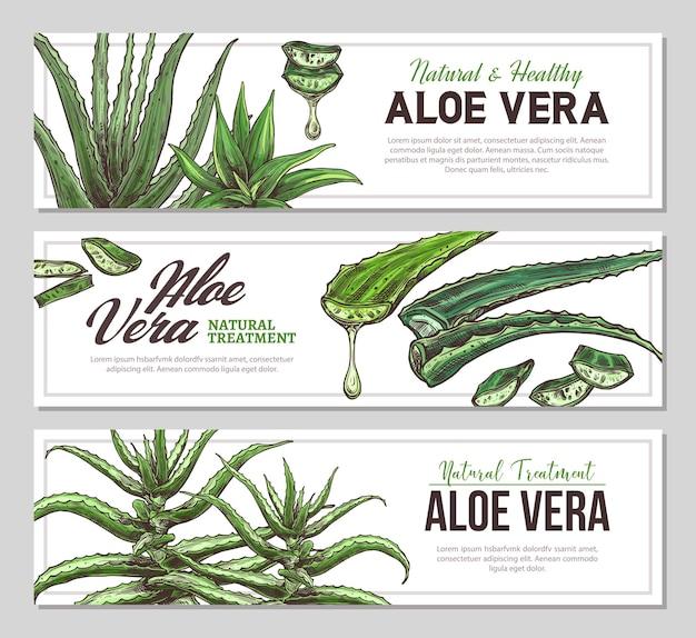 Aloë vera verticale banners met schets botanische illustraties van medicijnplanten