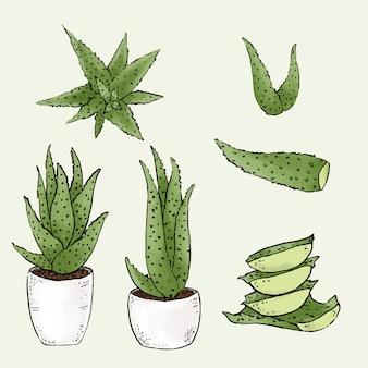 Aloevera-illustratiebundel op geïsoleerde groen