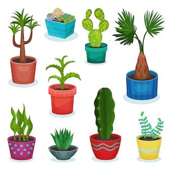 Altijdgroene kamerplanten in bloempot set, element voor decoratie interieur illustraties op een witte pagina