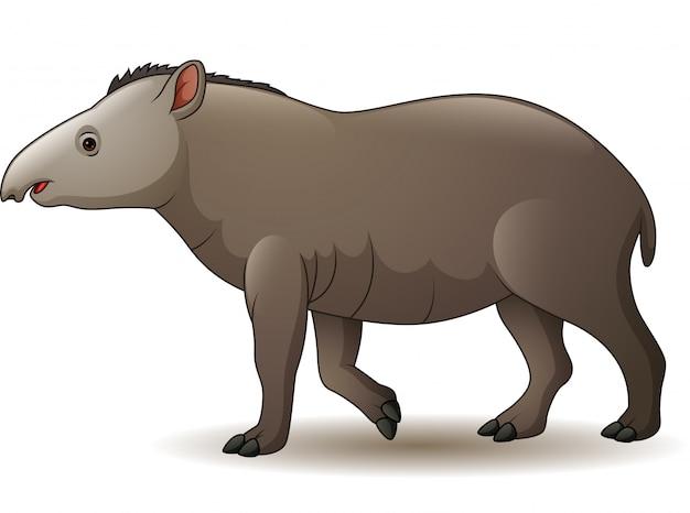 Amerikaanse tapir die op witte achtergrond wordt geïsoleerd