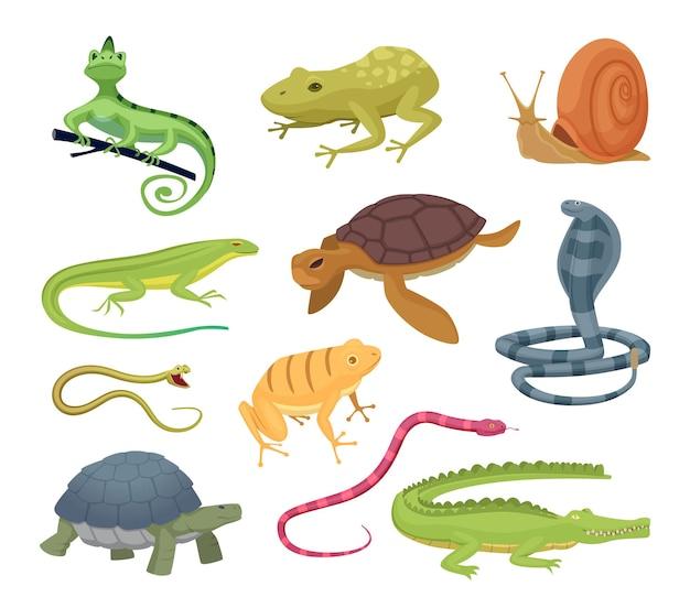 Amfibieën en reptielen. wilde dieren schildpadden reptielen slangen en hagedissen hete terrarium vectorkarakters in cartoon-stijl. hagedis wild, amfibie dier, slang en kameleon illustratie